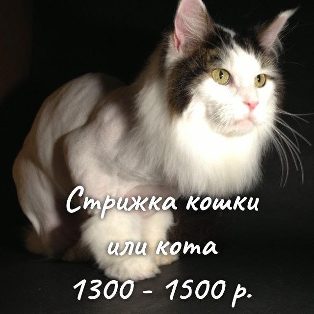 https://groomax.ru/portfolio/cat-cut