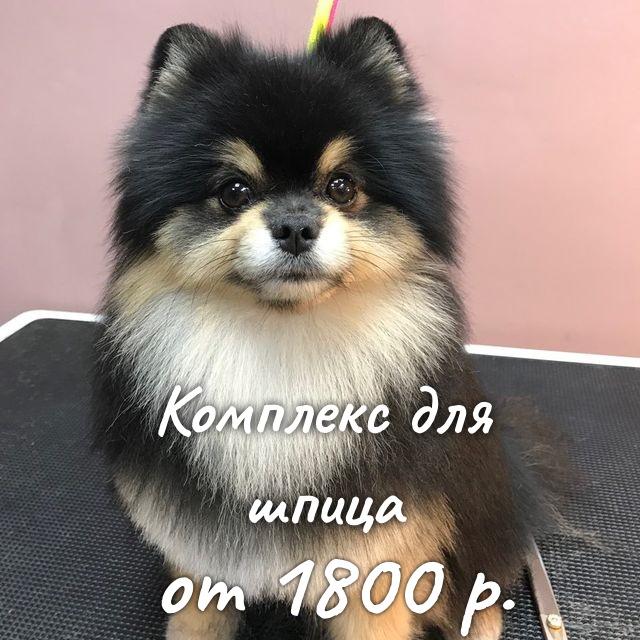 https://groomax.ru/portfolio/shpiz-complex
